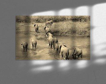 Olifanten familie van joey berkhout