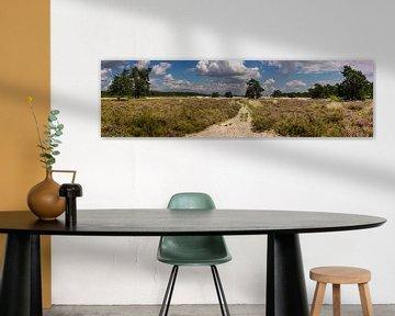 Loonse en drunense duinen van Jan Heijmans