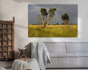 Donkere wolken boven de savanne sur Jim van Iterson