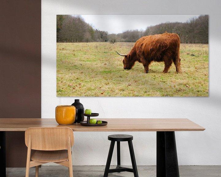Sfeerimpressie: Schotse Hooglander in het Amsterdamse bos van Stefanie de Boer