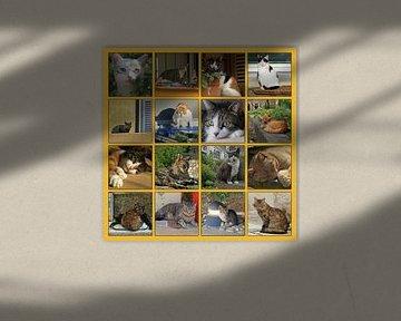 Collage van katten in allerlei situaties sur Gert van Santen