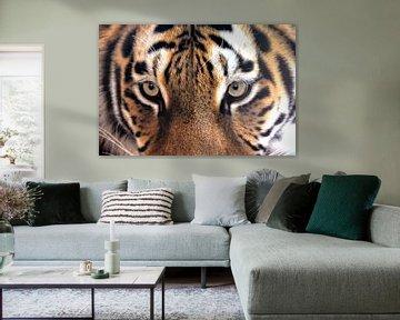 Im Auge des Tigers von Joachim G. Pinkawa