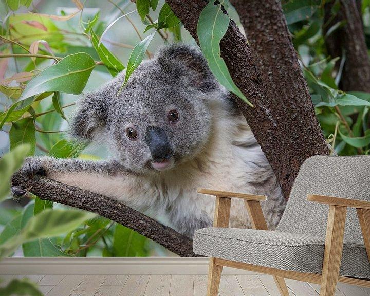 Sfeerimpressie behang: Koala (Phascolarctos cinereus) jong van 11 maanden in een boom, Australië van Nature in Stock