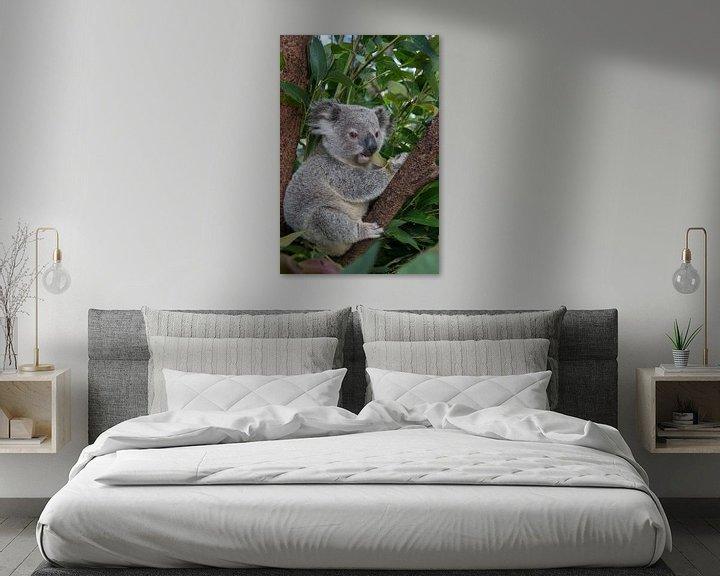 Sfeerimpressie: Koala (Phascolarctos cinereus) jong van 11 maanden zittend in een boom, Australië van Nature in Stock