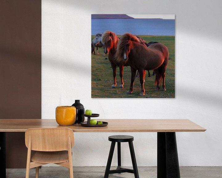 Sfeerimpressie: IJslandse paarden in avondlicht van Menno Schaefer
