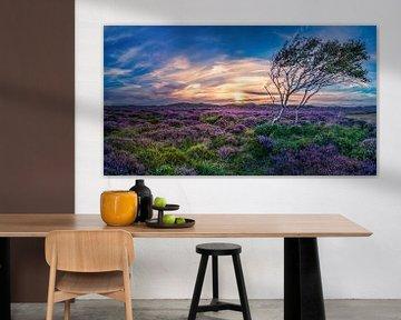 De Bollekamer Texel van Texel360Fotografie Richard Heerschap