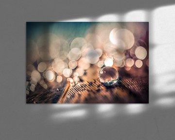 Waterdruppel op een veer van Bert Nijholt