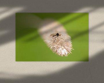 Kleine rover von Marcel  van Rooijen