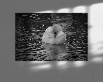 Zwaan , zwart wit von Angela Worst