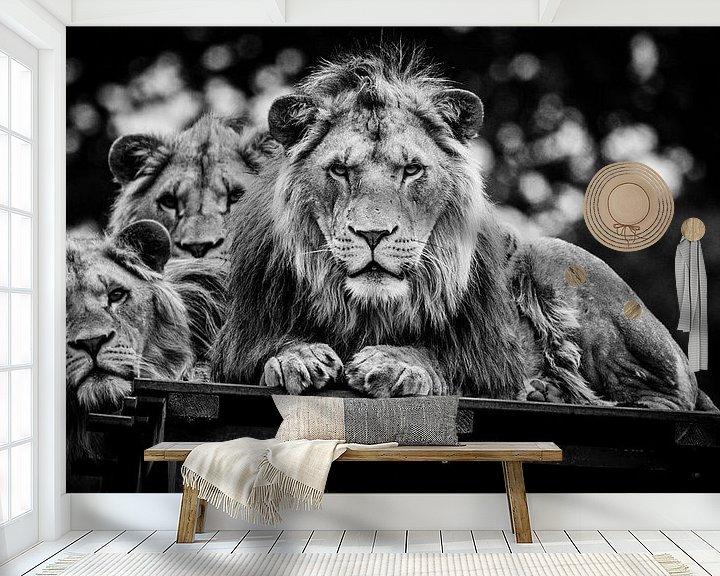 Sfeerimpressie behang: Starende Leeuwen van Joan le Poole