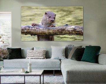 Europese Vis Otter op boomstam van Randy van Domselaar