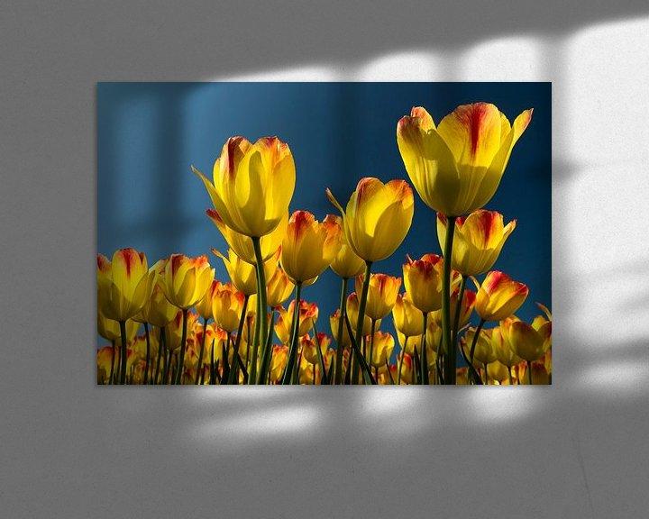 Sfeerimpressie: tulp geel van Hans Kerchman