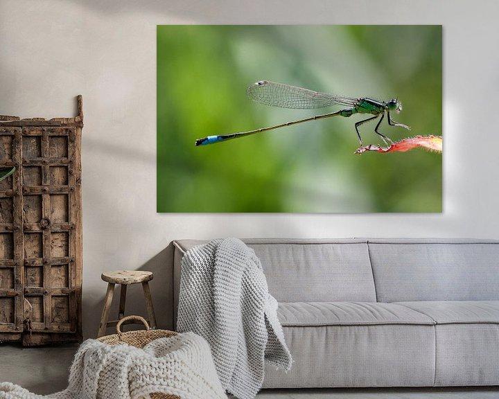 Sfeerimpressie: Groene libelle lantaarn op een rood blaadje van Maurice de vries