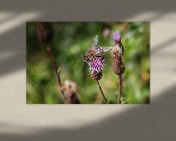 Abeille sur une fleur de chardon
