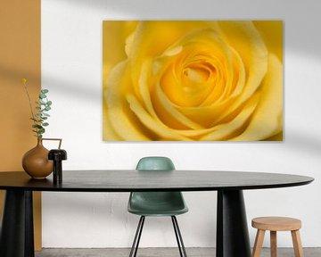 Gele Roos von Kimberly van Aalten
