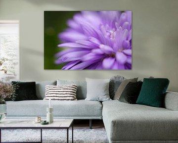 Paarse bloem van Kimberly van Aalten