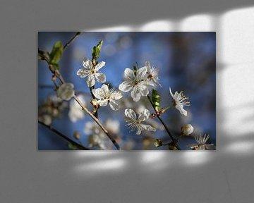 Kwieke bloesem van Rianne Fotografeert