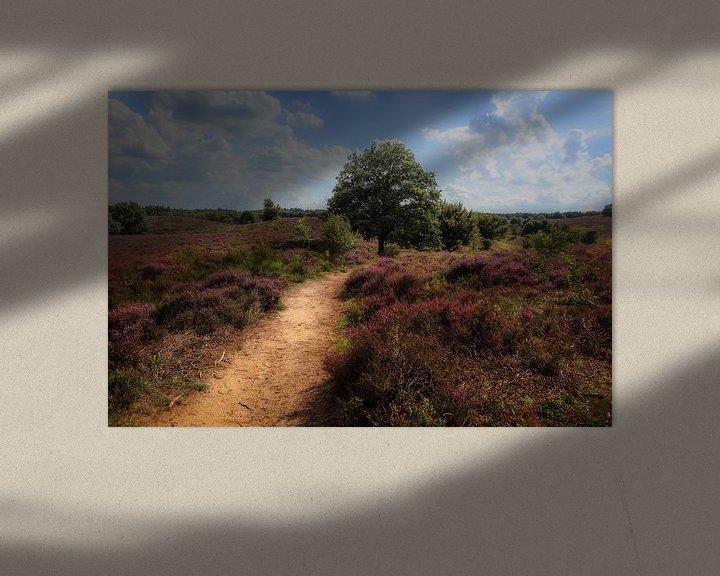 Beispiel: Heath landscape with purple heather flowers von Tim Abeln