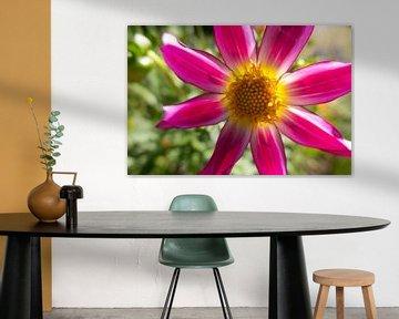 Prachtige roze bloem von Daniëlle van der meule