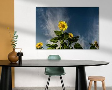 Zonnebloemen von Kees Rustenhoven