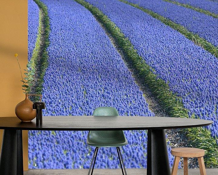 Beispiel fototapete: Veld met druifhyacinten - blauwe druifjes von Ronald Smits