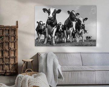 Kühe von Hermen Buurman