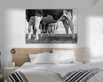Die neugierige Kuh von Hermen Buurman