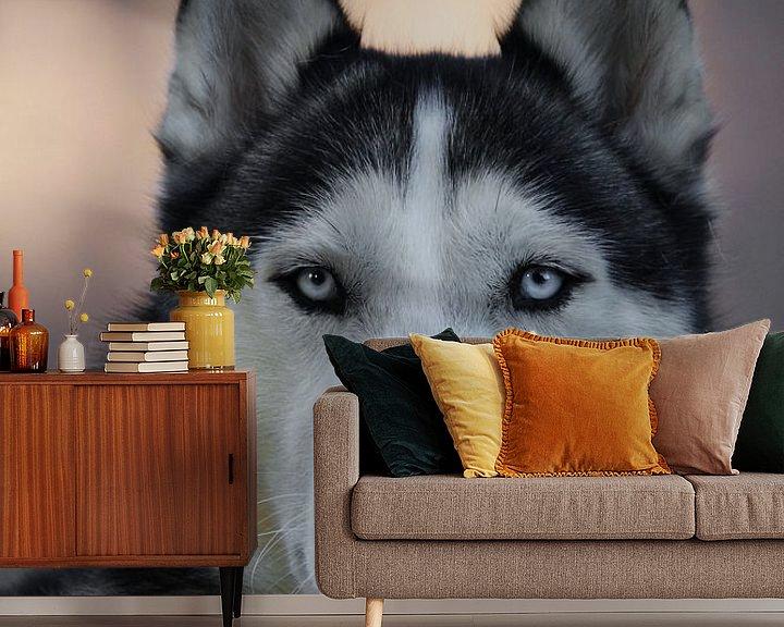 Beispiel fototapete: Husky Igor 4 Kleur von Samanta van Wezel