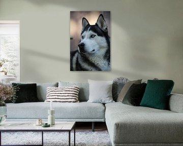 Husky Igor 5 kleur von Samanta van Wezel