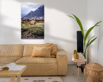 Hert in de Schotse hooglanden van Nick Chesnaye