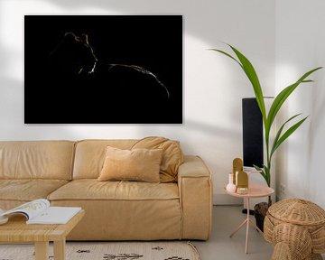 Lion Silhouette van Claudia van Zanten