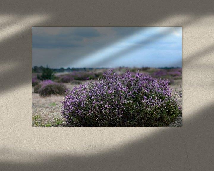 Sfeerimpressie: Kalmthoutse Heide van Elly Damen