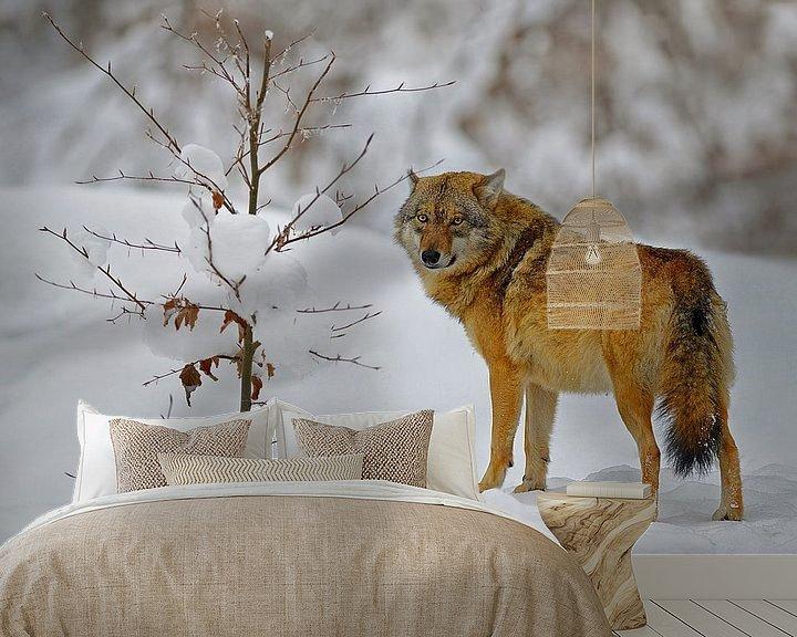 Beispiel fototapete: wolf in de sneeuw von eric t'kindt