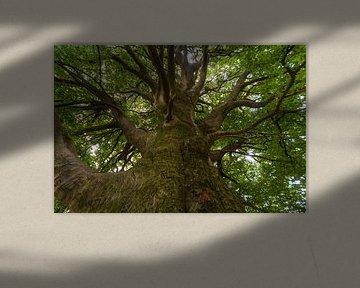 big tree  van Alexander Cox