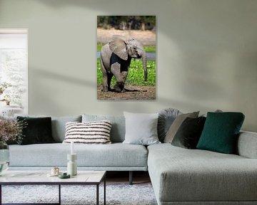 Junger Elefant, wildlife in Afrika von W. Woyke