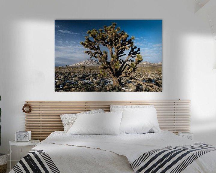 Sfeerimpressie: Portret van een zogeheten Joshua Tree (Yucca brevifolia) groeiend in Death Valley National Park in d van Nature in Stock