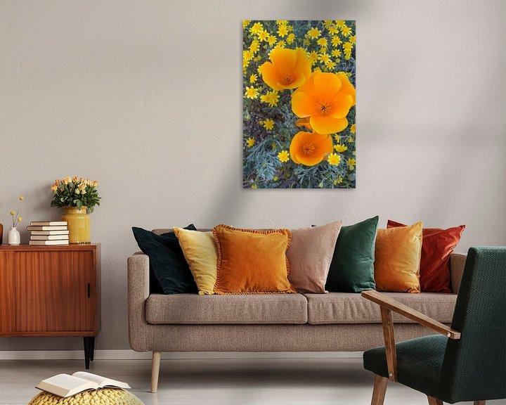 Sfeerimpressie: Bovenaanzicht van bloeiende bloemen in close-up, groeiend in Antelope Valley, Verenigde Staten van Nature in Stock