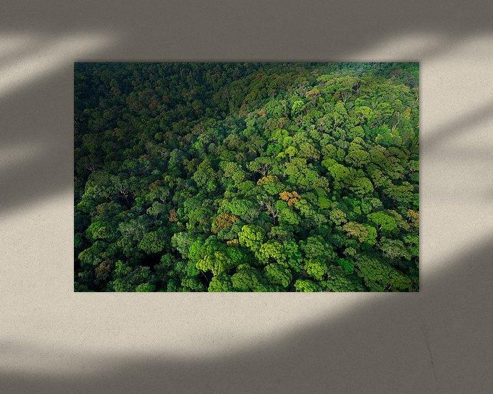 Sfeerimpressie: Luchtfoto van het regenwoud van Lambir Hills National Park van Nature in Stock