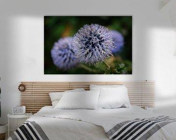 Paarse Allium von Jos Reimering
