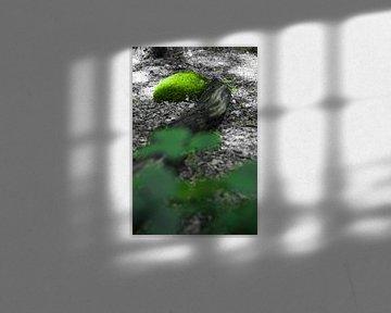 Een zwart-wit en kleuren foto uit het bos. von Leon Schijf