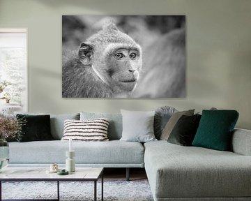 Affe in Bali von Aukelien Philips