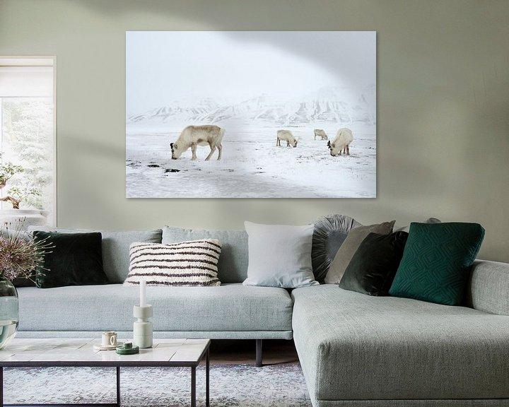 Sfeerimpressie: Rendieren in de sneeuw van LTD photo