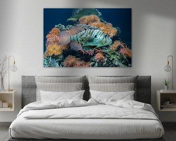 Korallen-Teufel von Aukelien Philips