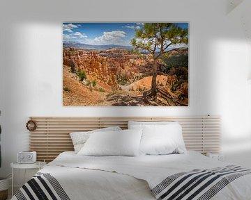 Bryce Canyon van Jeffrey Van Zandbeek