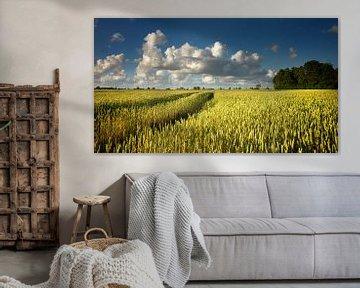 Goldenes Korn in der Sonne sur Bo Scheeringa Photography