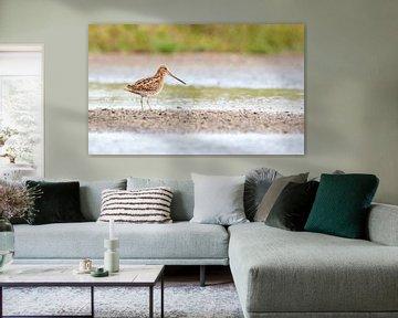 Watersnip, (Gallinago gallinago) von Sjoerd de Hoop