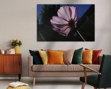 Paarse bloem Christchurch Nieuw Zeeland van Dennis Rietbergen