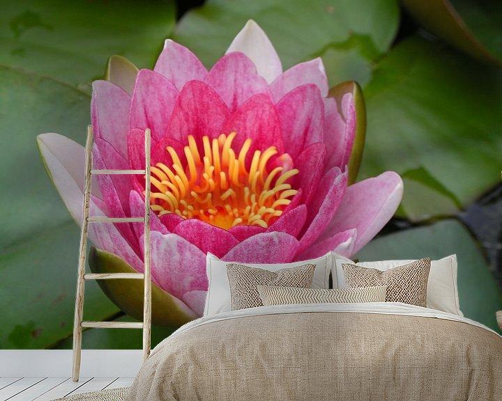 Impression: Lotus sur Dennis Rietbergen