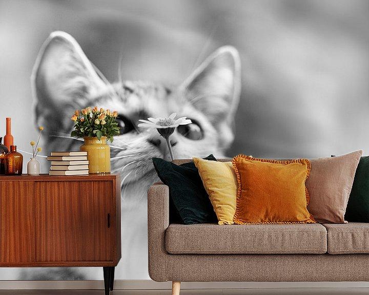 Beispiel fototapete: Nieuwsgierig kitten von Mds foto