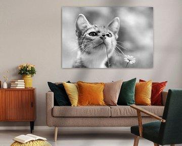 Nieuwsgierig kitten von Mds foto